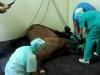 post-intubacion