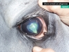 ulcera-corneal-con-colagenasas