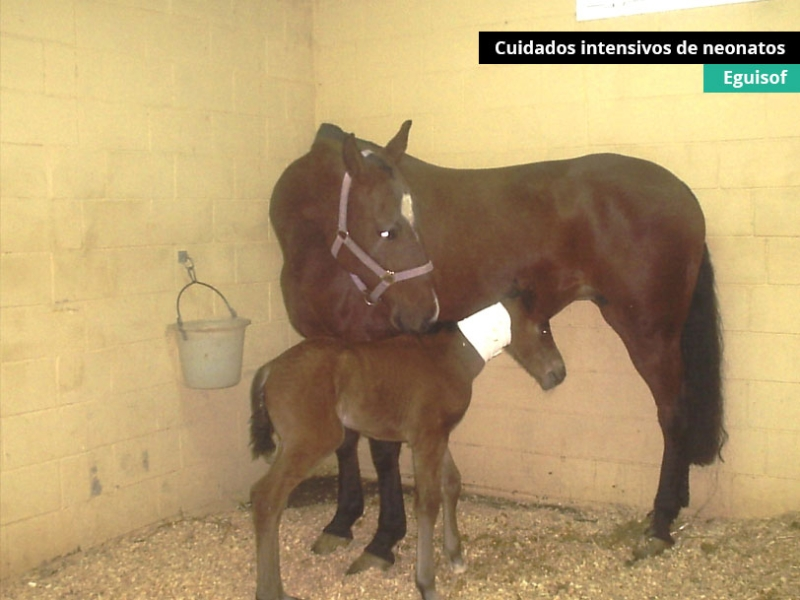cuidados-intensivos-neonatos