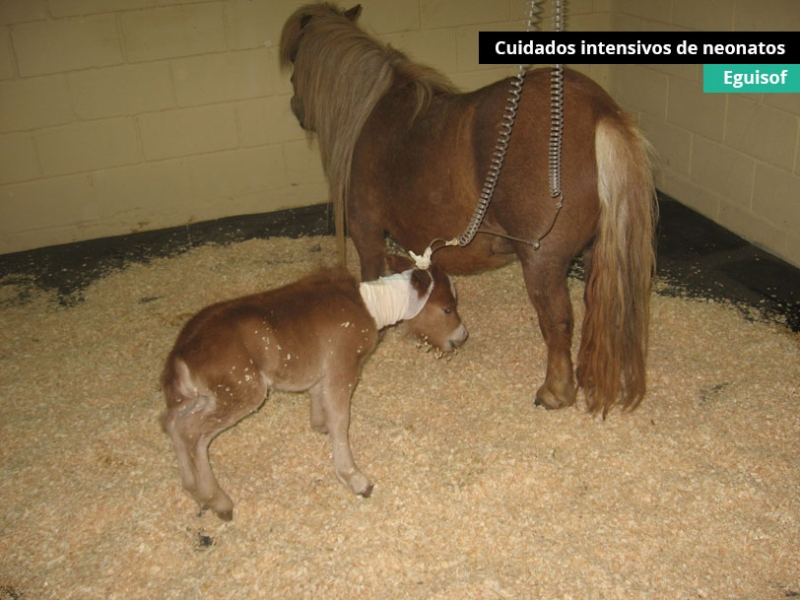 cuidados-intensivos-neonatos2