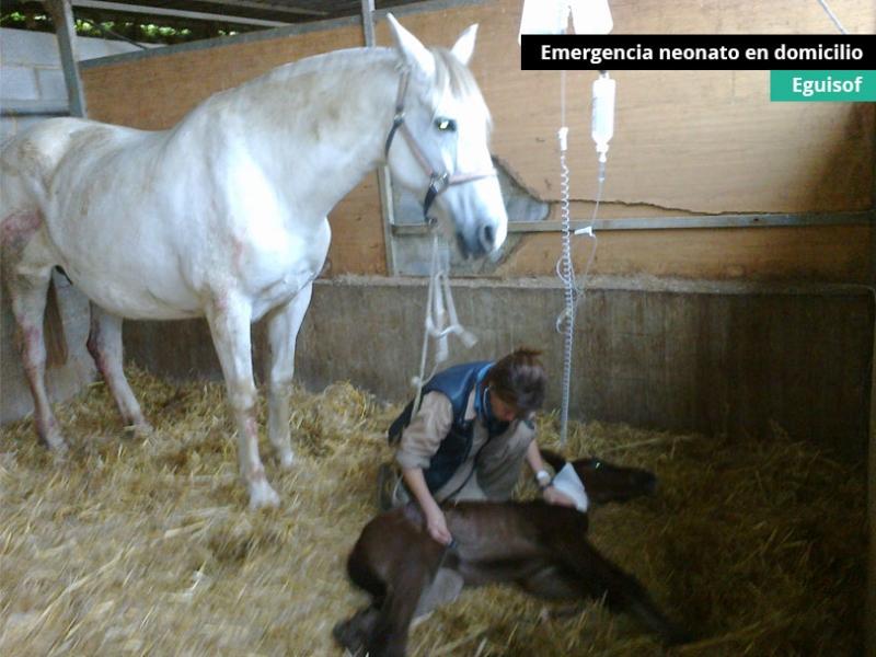 emergencia-neonato-en-domicilio-2e_0