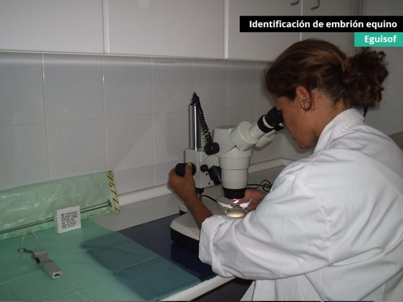 identificacion-de-embrion-equino