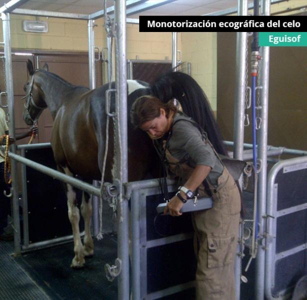 monotorizacion-celo
