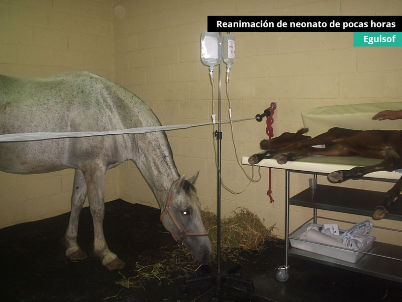 reanimacion-de-neonato-de-pocas-horas