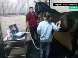 ecografia-transabdominal